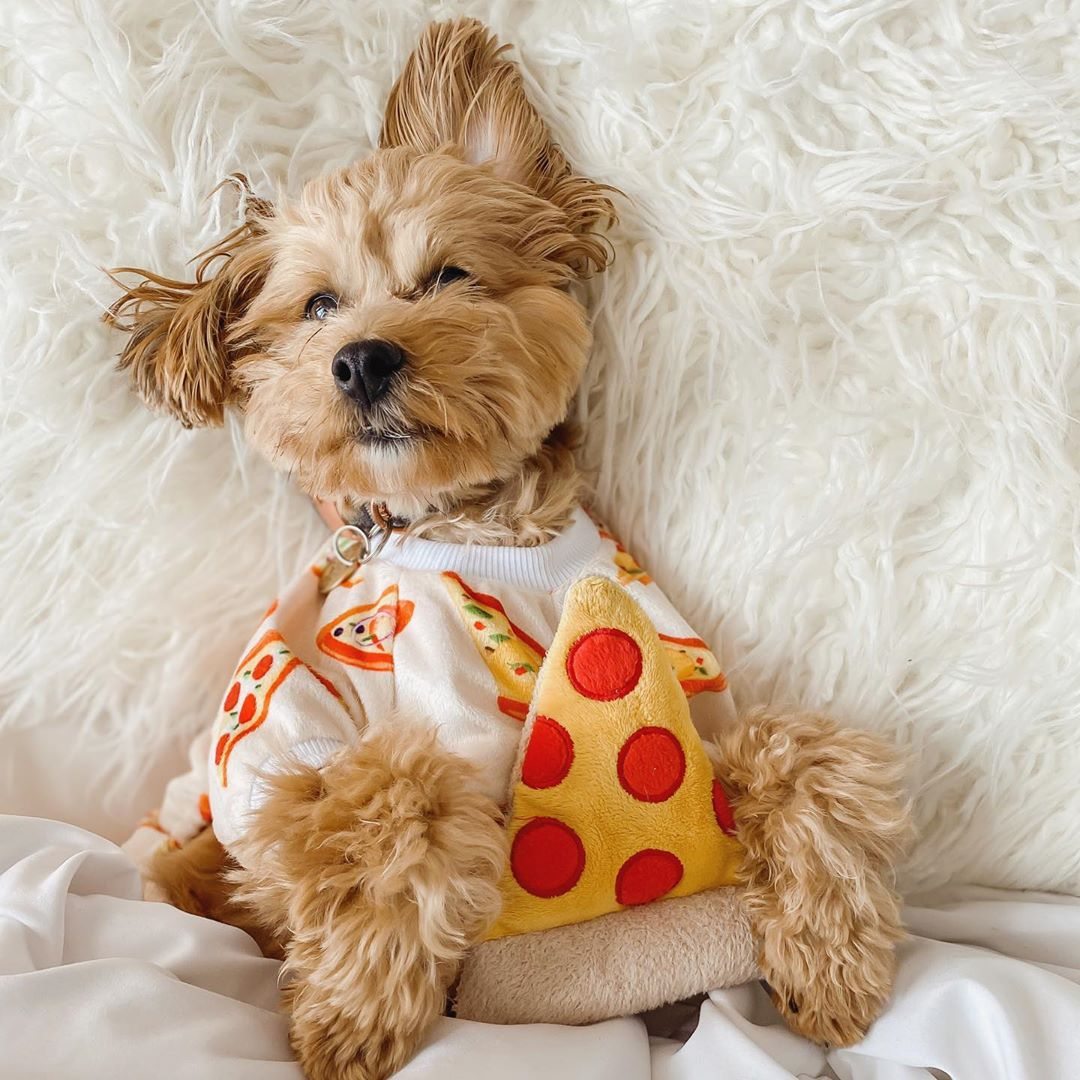 Pizza Dog Pajamas
