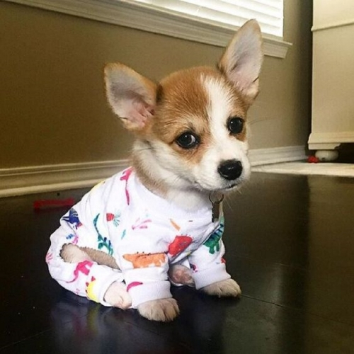 Colorful Dinosaur Dog Pajamas