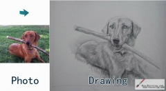 Custom Drawing-A dog with a stick in his mouth