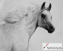 Custom Drawing-Horse