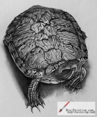 Custom Drawing-Pet tortoise
