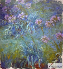 Agapanthus, between 1914 and 1926,