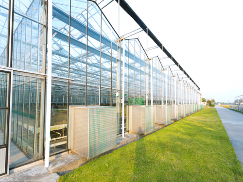 Venlo Multi-Span Greenhouse