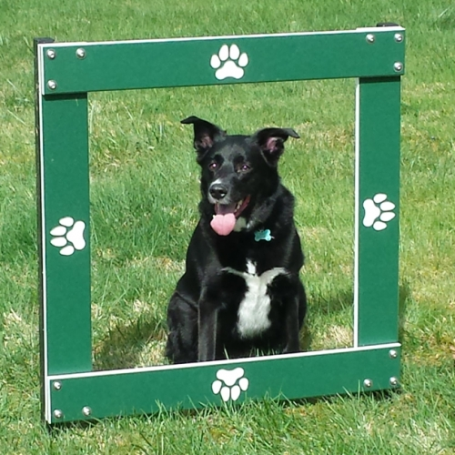 dog jumping outdoor square wood dog agility training equipment