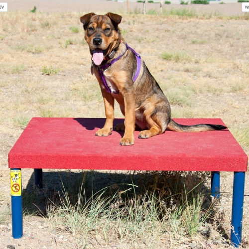 dog park agility training sitting and staying table meta square rest table