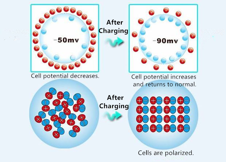 Cell potential increases and returns to normal after charging.