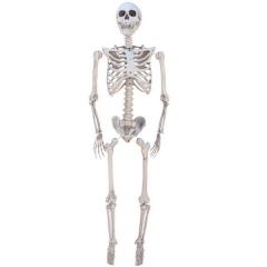 Realistic plastic skeleton skeleton haunted house decoration room escape bar Halloween props supplies imitation human bones