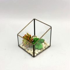 Clear Glass Vase Bottle Terrarium Glass Box for Flower or Plant