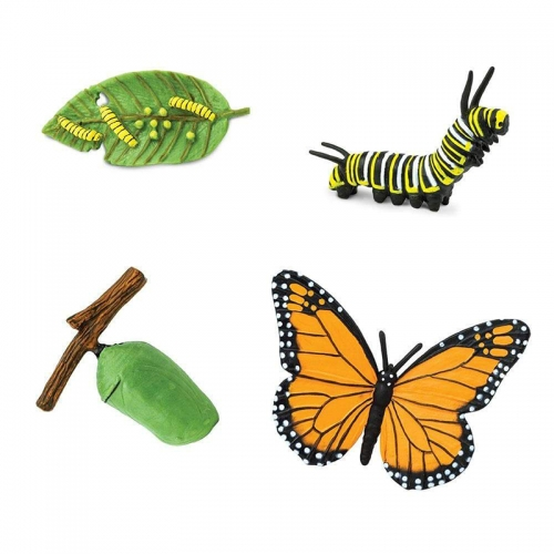 Safari Safariology Life Cycle of Monarch Butterfly