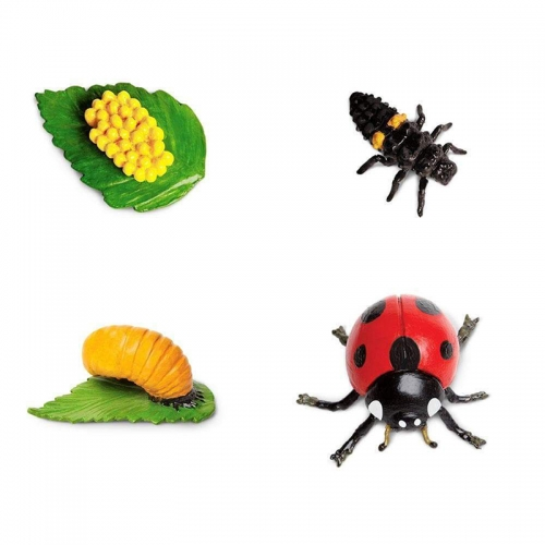 Safari Safariology Life Cycle of Ladybug
