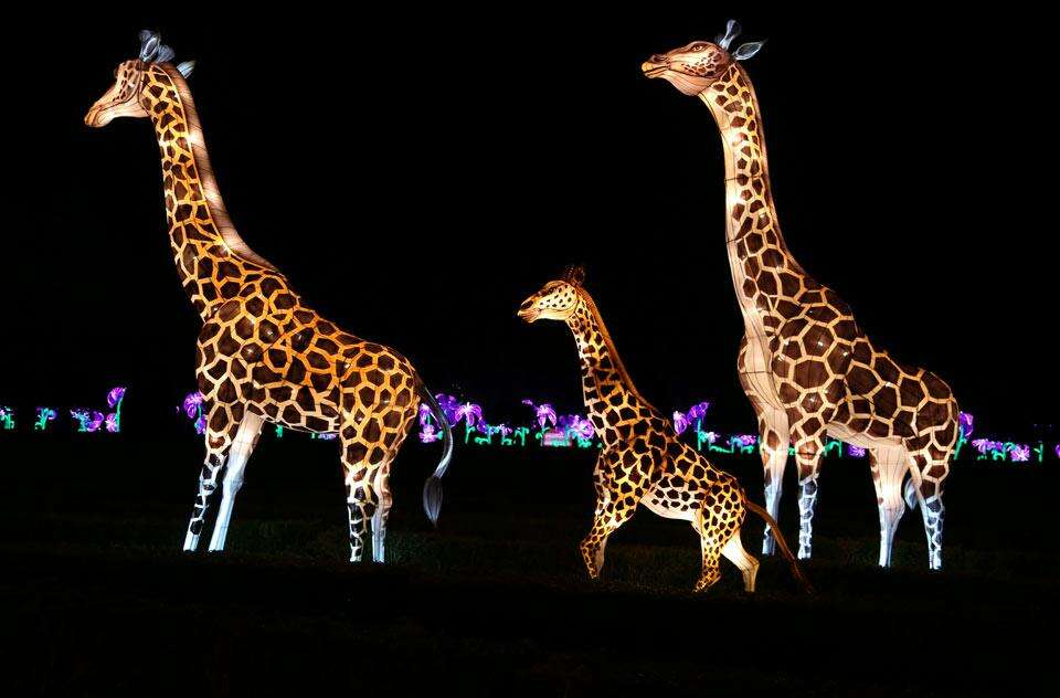 Animal Lanterns for zoo in USA