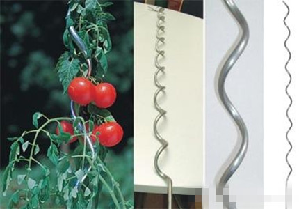 Glavanized Tomato Support Plant