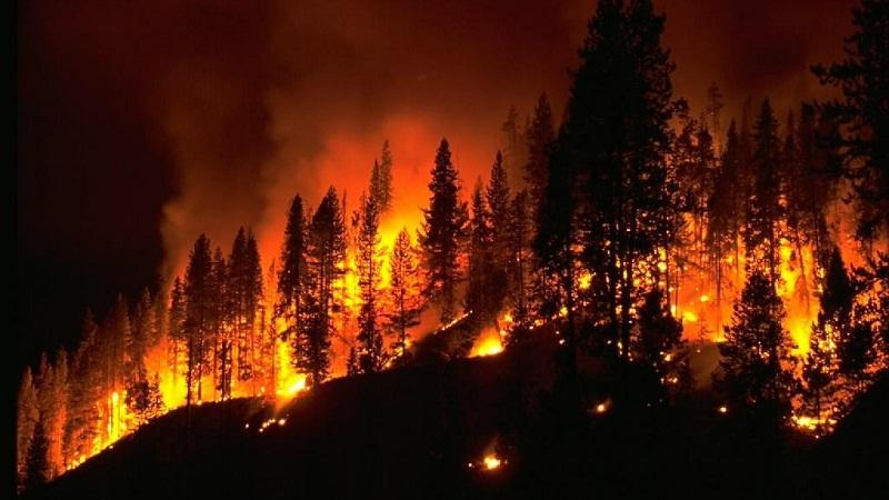 Forest fire warning remote wireless monitoring system