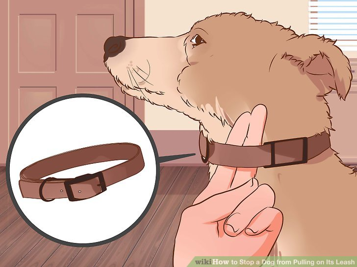 How to Stop a Dog from Pulling on Its Leash
