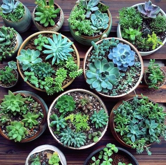 How to Care for Outdoor Succulents