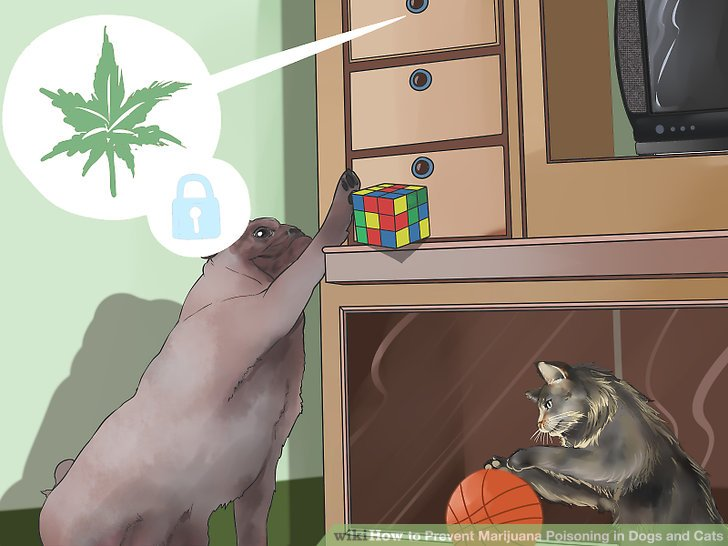 How to Prevent Marijuana Poisoning in Dogs and Cats