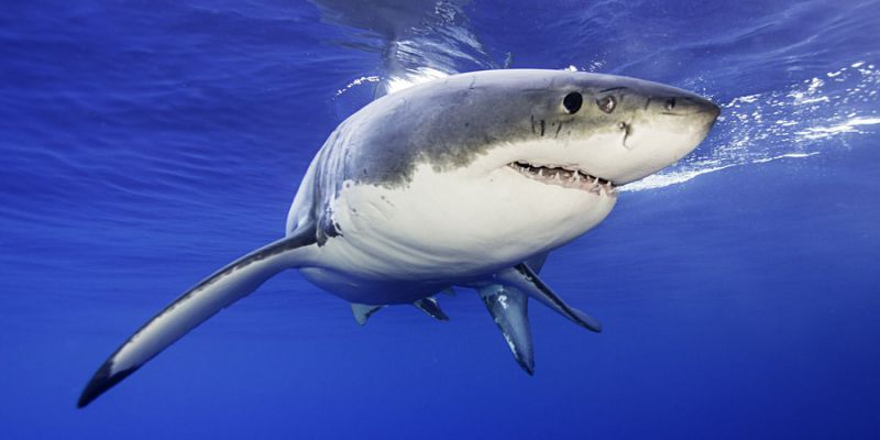At Least 2 People Have Been Attacked By Sharks In North Carolina In The Past 2 Weeks